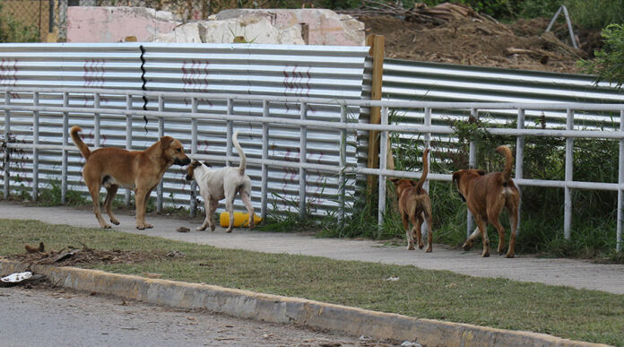 Perros abandonados. (Voces del Sur)